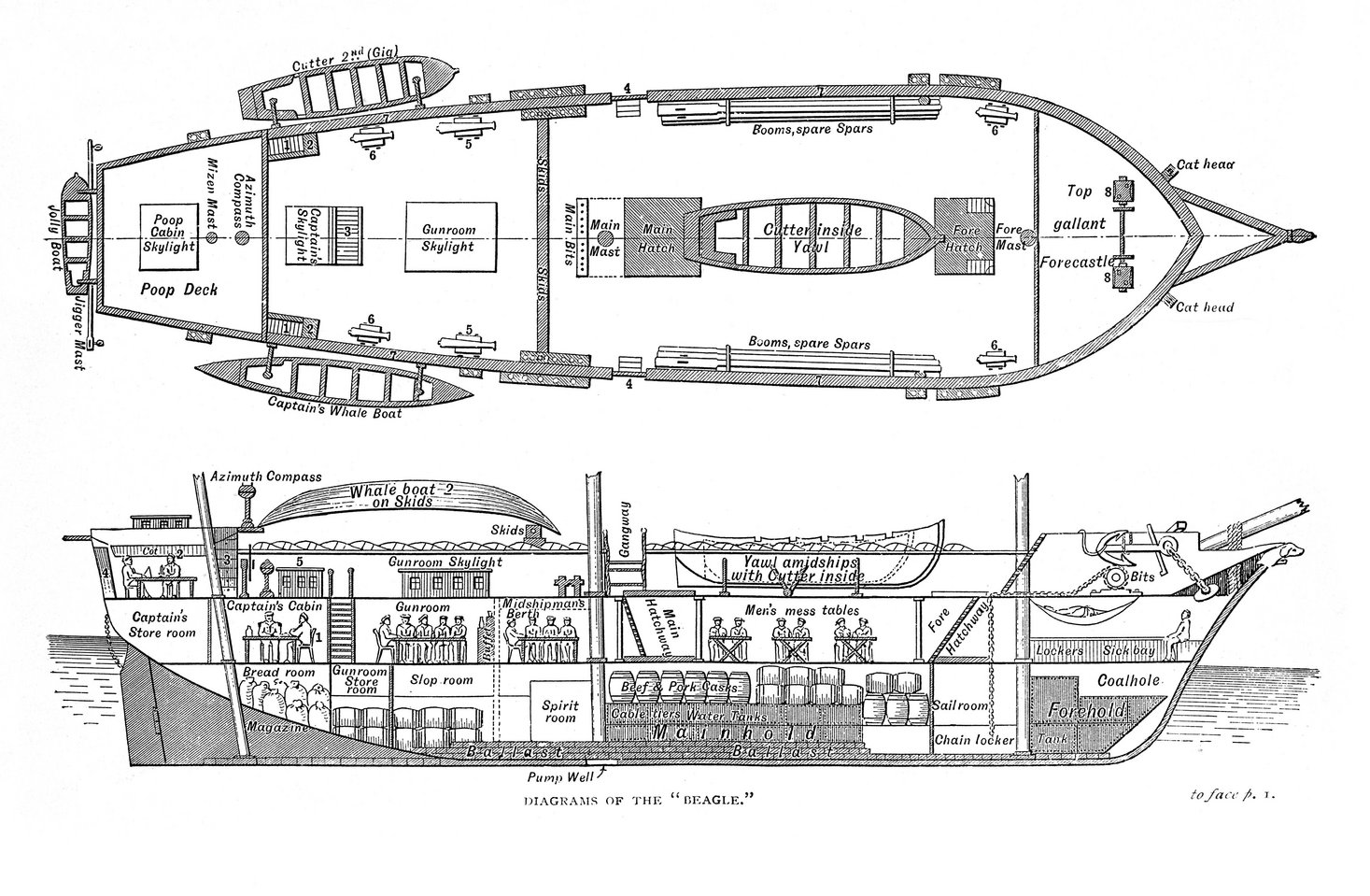 Plan and cross section of HMS Beagle