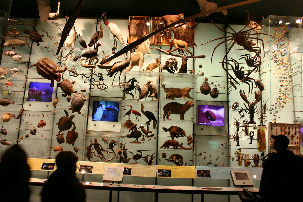 Hall of Biodiversity, American Museum of Natural History