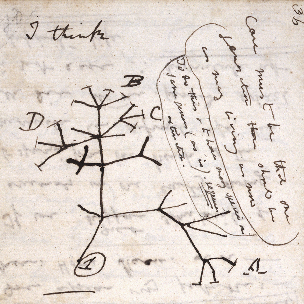 "Darwin's Tree of Life sketch from his ""B"" notebook on Transmutation of Species"