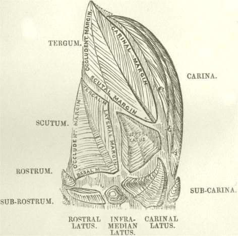 Nomenclature of the valves
