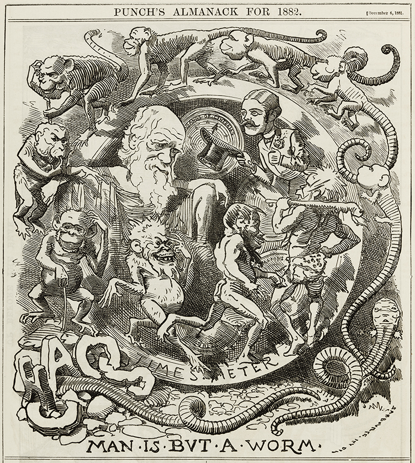 Man is but a worm - caricature of Darwin's theory in the Punch almanac for 1882
