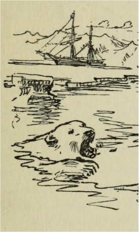 Detail from Modern whaling & bear-hunting by William Gordon Burn Murdoch, p. 217 (Philadelphia: J.B. Lippincott, 1917)