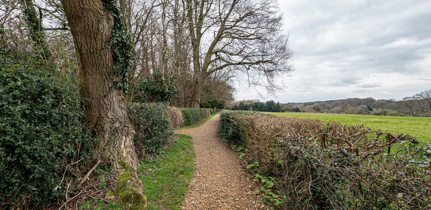 A tree-lined walk along a sandy track at Down House, Kent